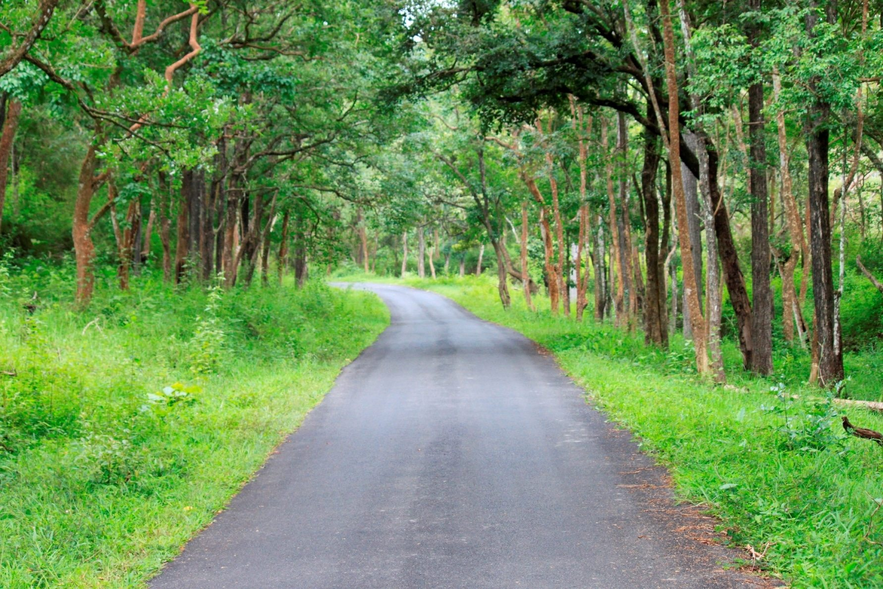 5 Awesome Coorg Quotes Which Tells The Remarkable Facts