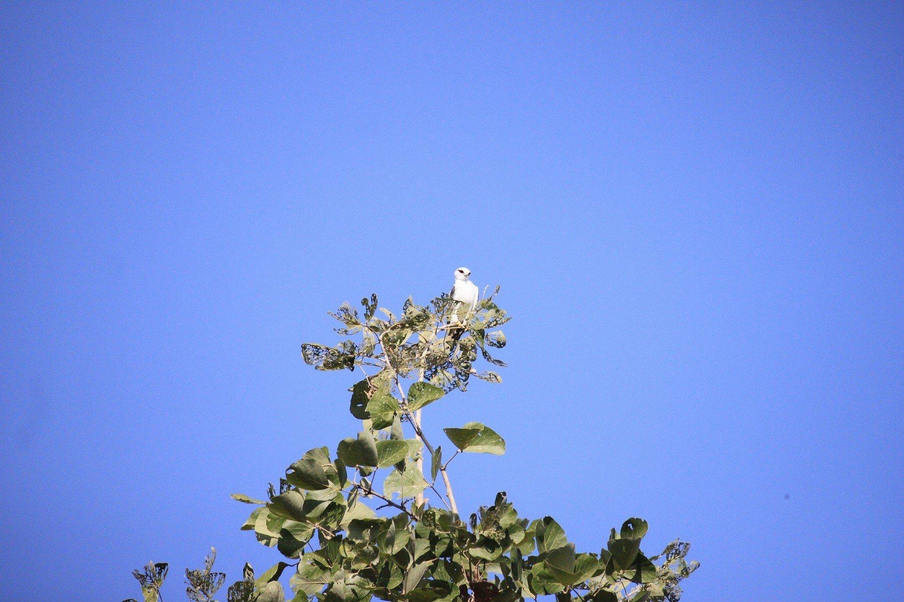 Satpura National Park-Eagle