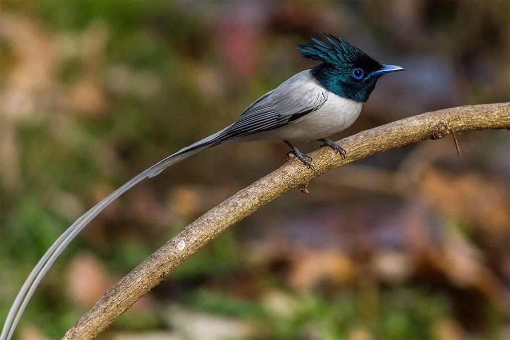 Nainital Bird