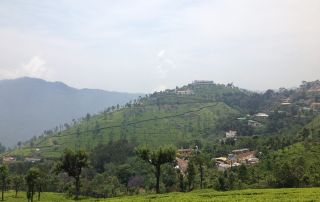 Ooty best cottages