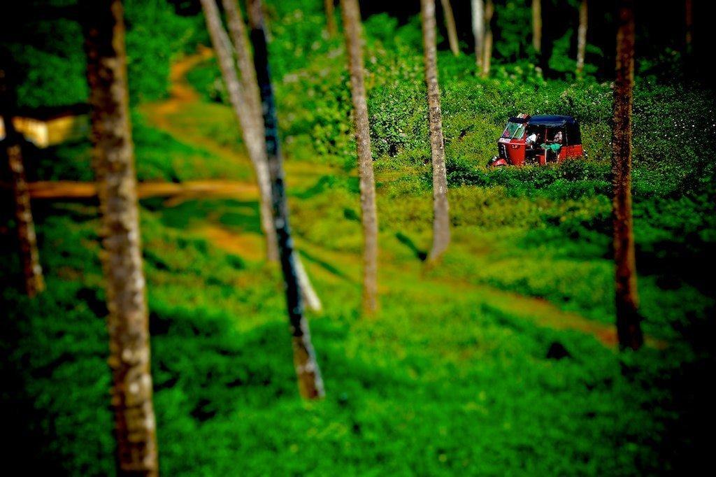 Tuk tuk tilt shift, Sri Lanka Tea Estate