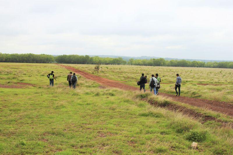 Hesaraghatta grasslands