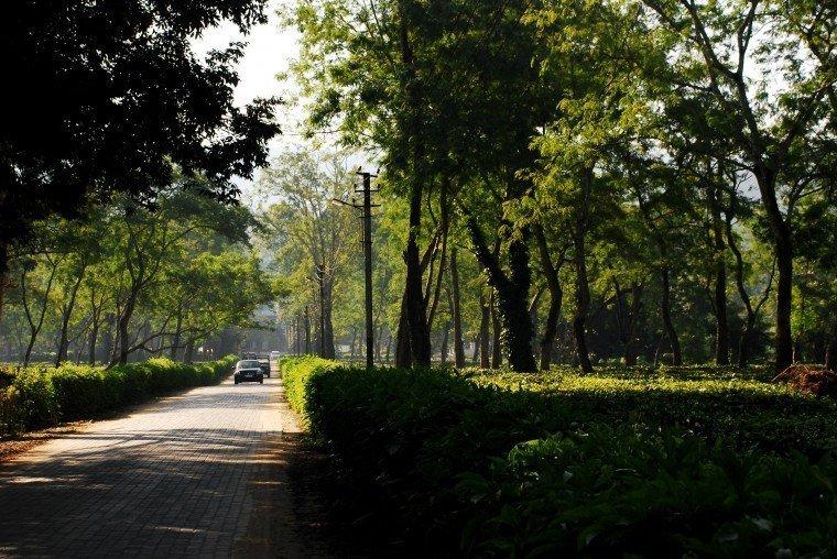 Kaziranga, Assam, Tea garden, Assam Tea, Assam tourism