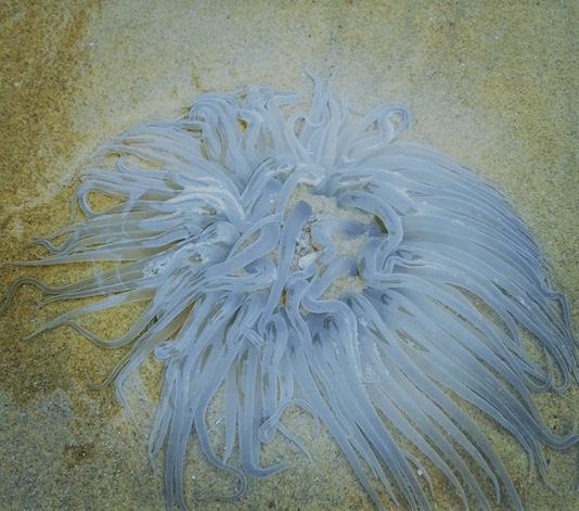 mandarmani, sea, india, west bengal, squid