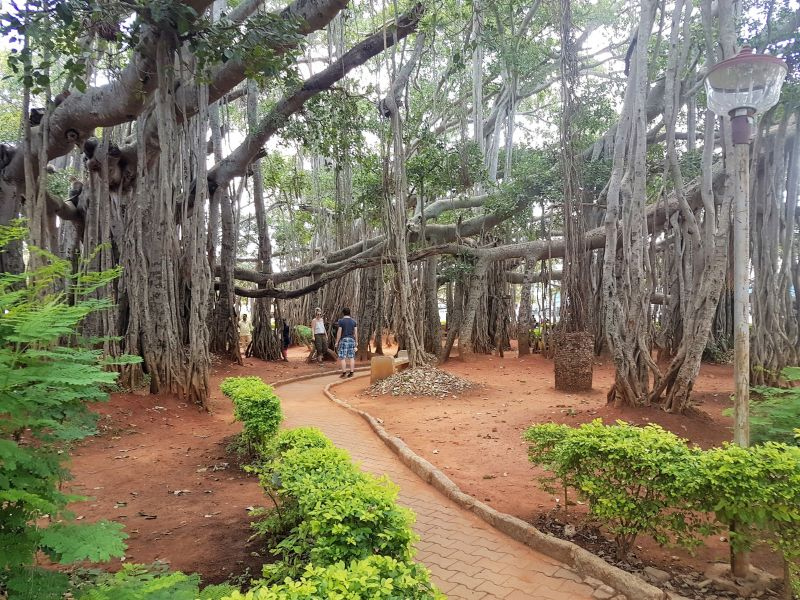 Big Banyan Tree Bangalore