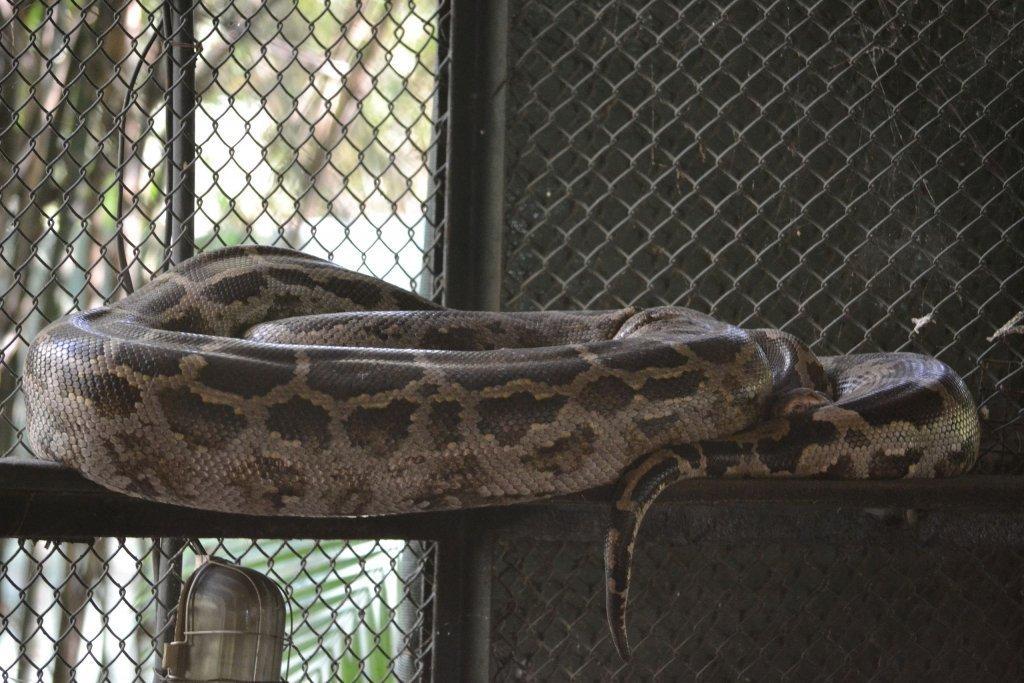 Katraj Snake Park Pune