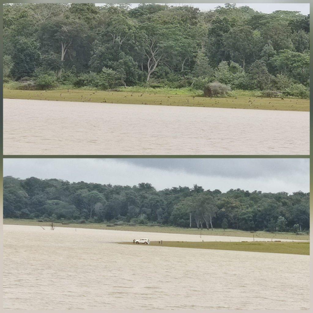 Kabini backwater