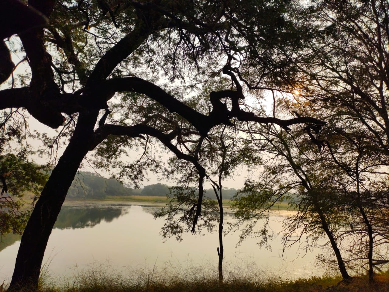 Ranthambore water body