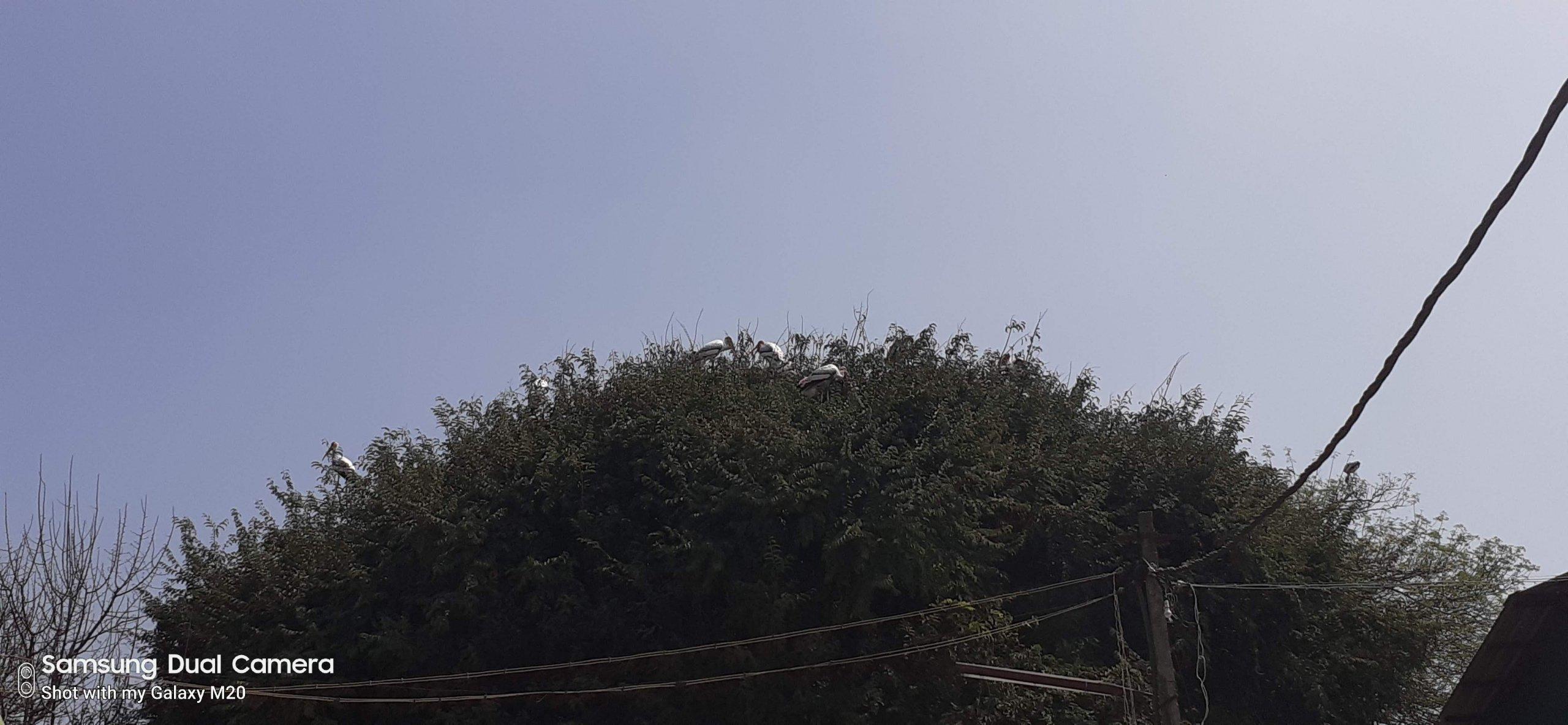 Kokkare Bellur Bird Sanctuary
