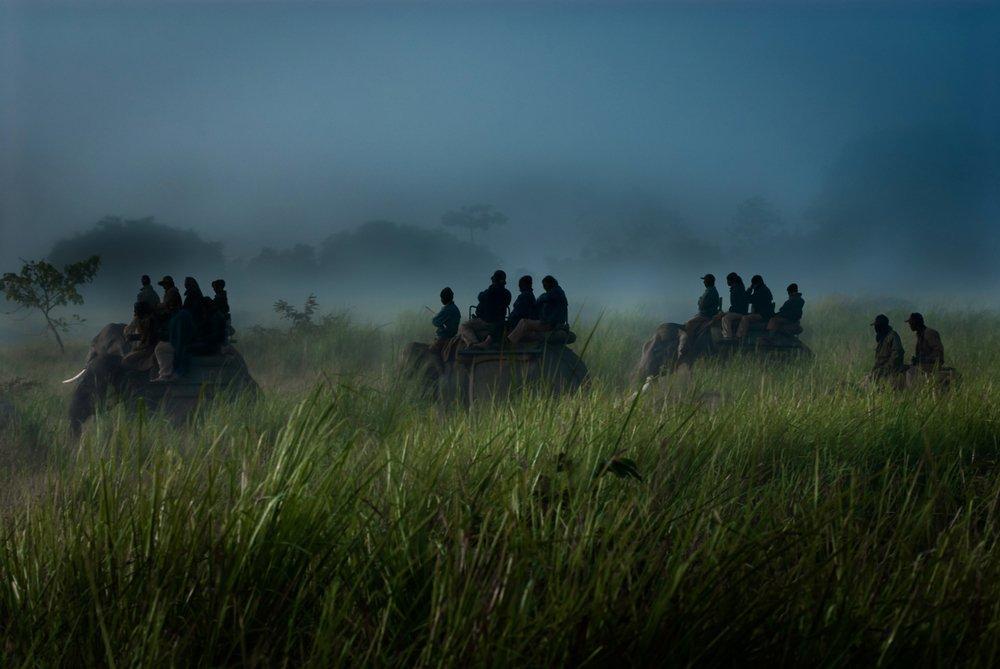 Kaziranga Elephant Safari