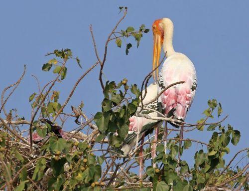 Kokkare Bellur Travel Guide | A Lesser Known Bird Sanctuary Near To Bangalore | 88 Km